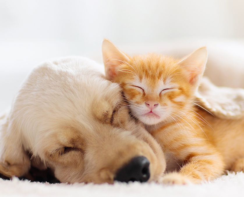 Quel est le rôle d'un comportementaliste pour chat ou pour chien ?