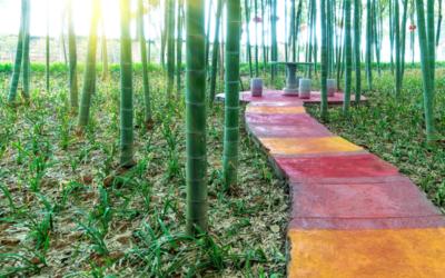 Comment les couleurs Feng Shui peuvent améliorer votre bien-être à la maison.